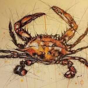14733469 134689550329523 1209674218908680192 n 300x300 - Cảm hứng Artline #8: Bộ tranh động vật độc đáo của nữ họa sĩ Australia